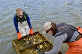 Teamwork, Forty North Oyster Farms / Barnegat Oyster Collective
